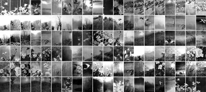 Birds & Flowers, Gelatin Silver Prints, 9 feet x 19 feet, (120 individual 17in x 11in prints), 2008