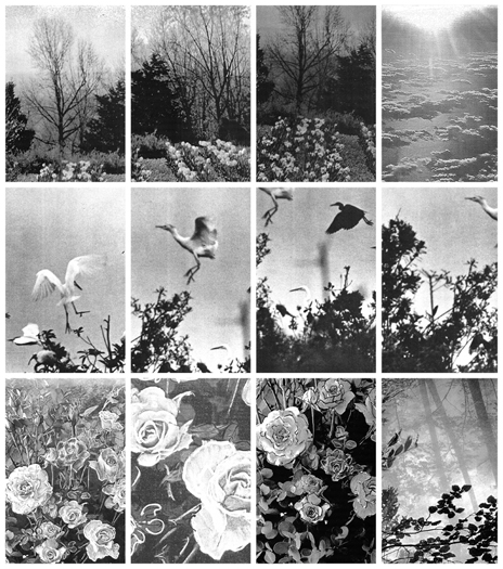 Birds & Flowers DETAIL, Gelatin Silver Prints, 9 feet x 19 feet, (120 individual 17in x 11in prints), 2008