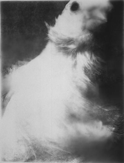 Bird/White Feathers, Gelatin Silver Print, 66