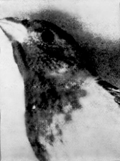 "Bird Looking Up, Gelatin Silver Print, 62"" x 47"", 2000-1"