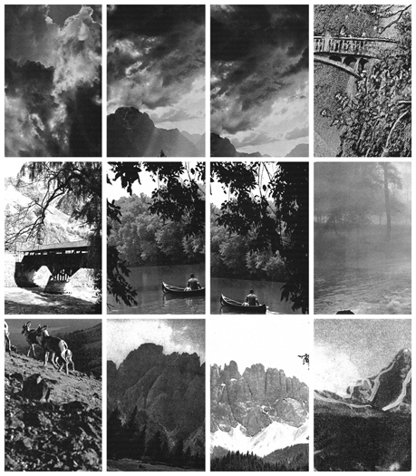 Branches DETAIL, Gelatin Silver Prints, 9 feet x 17 feet, (108 individual 17in x 11in prints), 2006-7