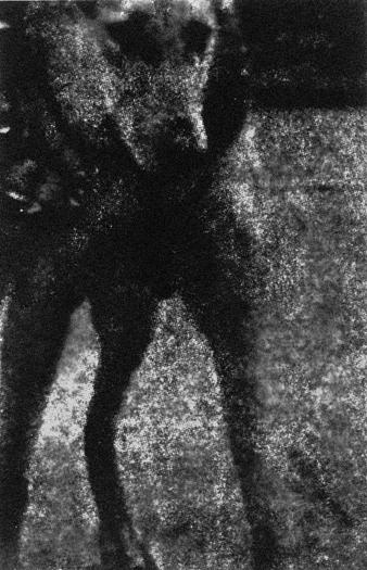 Dog, Gelatin Silver Print, 72in x 46in, 1999