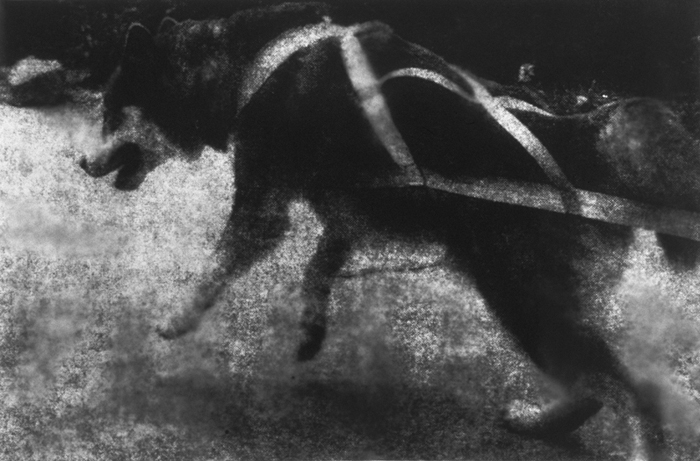 Harness, Gelatin Silver Print, 48in x 73in, 1999