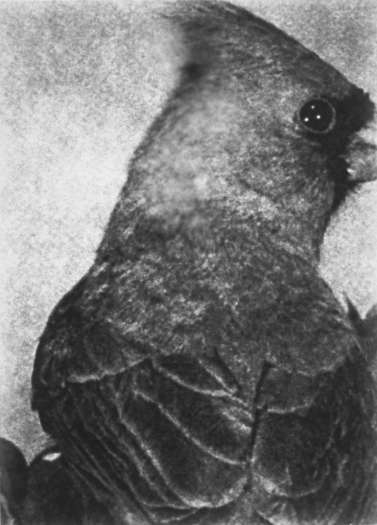 Bird/Back, Gelatin Silver Print, 70