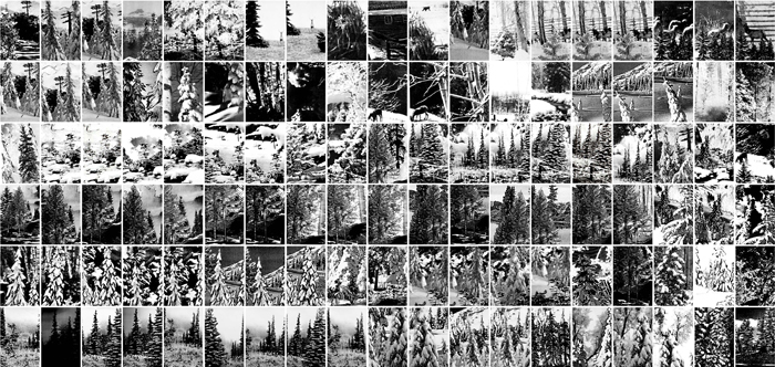 Winter Trees, Gelatin Silver Prints, 9 feet x 18 feet, (114 individual 17in x 11in prints), 2006